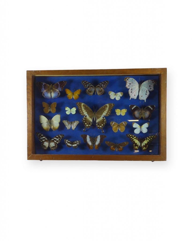 papillons-afrique-0666