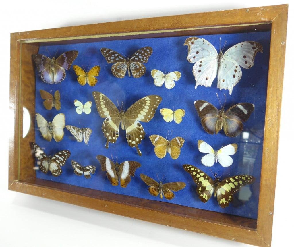 papillons-afrique-0667
