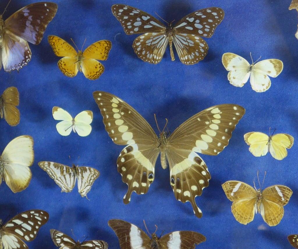 papillons-afrique-0669