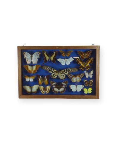 papillons-cameroun-0672