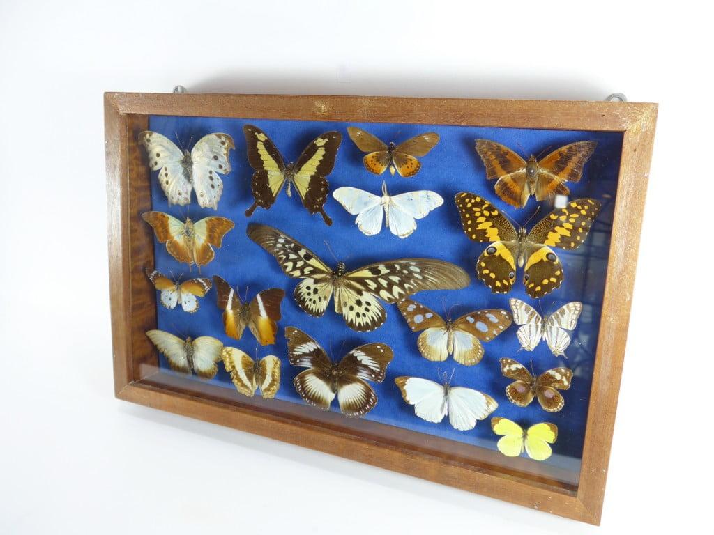 papillons-cameroun-0674